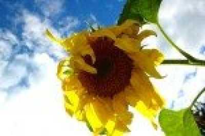 Солнце влияет на частоту врожденных пороков развития  Профессия  мать  Дамский онлайн клуб